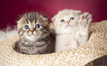 Коты на все случаи жизни: как правильно выбрать питомца (советы)