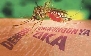 С вирусом Зика будут сражаться ГМО-комары