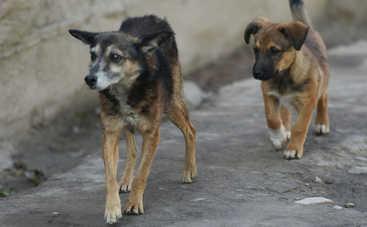 В Киеве бродячие животные все чаще бросаются на людей