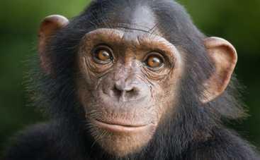 В Мариупольском зоопарке обезьяна отгрызла младенцу палец