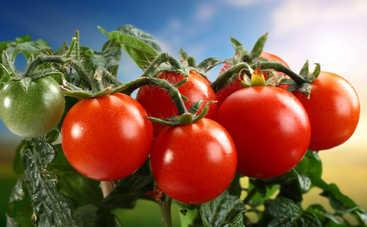 Все буде смачно: 10 лучших блюд из помидоров - часть 2 (эфир от 11.09.2016)