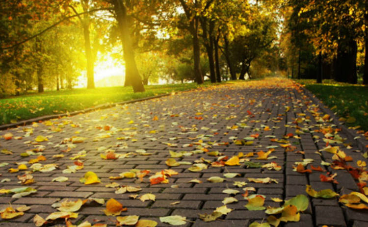 Киевляне первыми услышат запах осени