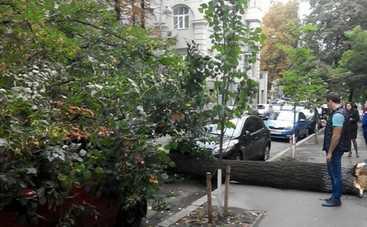 В Киеве рухнувшее дерево придавило несколько авто (фото)