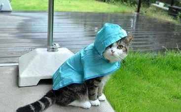 Украину накроют очень сильные дожди