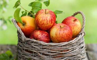 Все буде смачно: 10 лучших блюд из яблок - часть 2 (эфир от 09.10.2016)