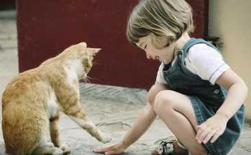 Оказывается, кошки незаменимы для сердечников