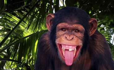В корейском зоопарке закурила шимпанзе (видео)