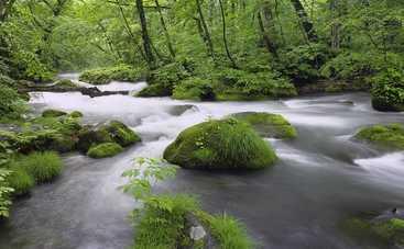 Ученые уверены, что живая природа под угрозой
