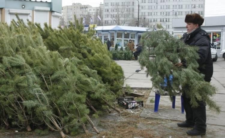 В Украине новогодние елки будут сдавать в аренду