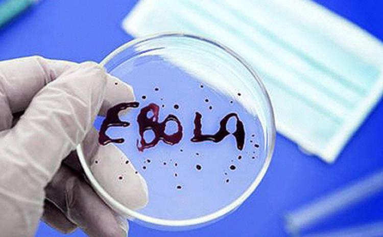 Вирус Эбола мутирует и становится опаснее