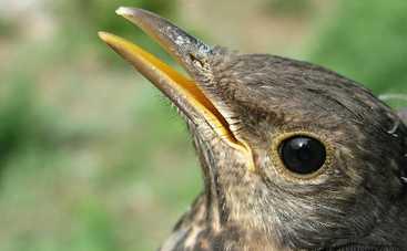 Ученые раскрыли секрет птичьего клюва