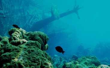 У берегов Каталонии нашли затонувший корабль времен Римской империи (фото)