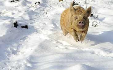 Сегодня погода подсунет киевлянам снежную свинью