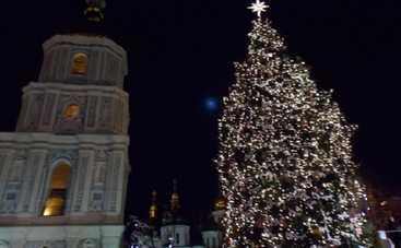 Доставка главной елки страны в Киев обойдется дороже самого дерева