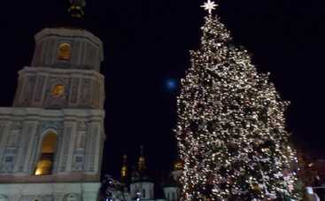 Главная елка страны уже в Киеве (видео)