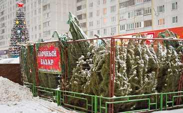В Киеве будут работать 100 елочных базаров