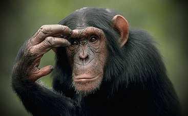 Ученые доказали, что обезьяны способны говорить
