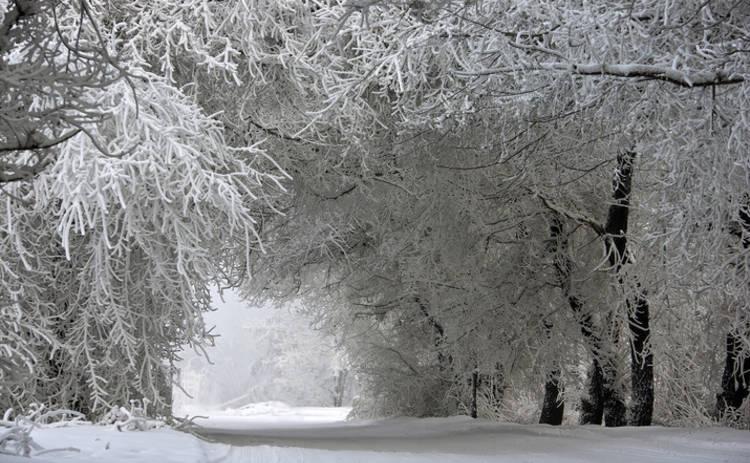 Погода в Саратовской области на сегодня - вторник 19 января 2021 года