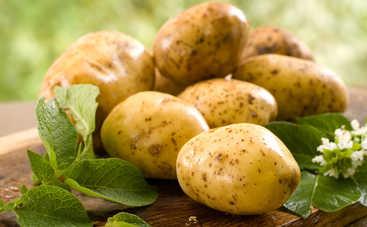Все буде смачно: 10 новых блюд из картофеля - часть 1 (эфир от 11.02.2017)
