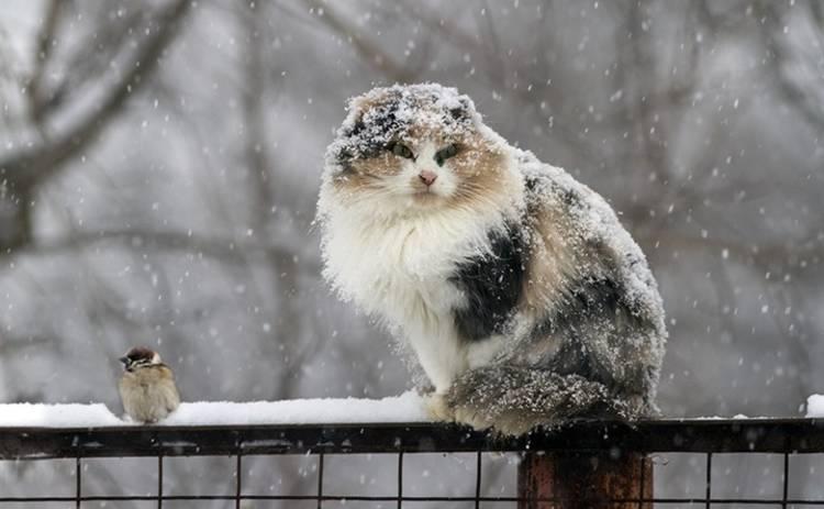 Сегодня в Украине ожидается мокрый снег