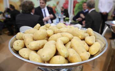 Ученые доказали, что на Марсе можно выращивать картофель