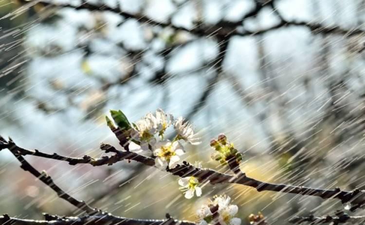 Сегодня в Украине будет прохладно и мокро