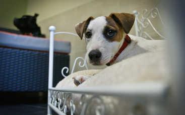 Британка и ее собака установили новый рекорд