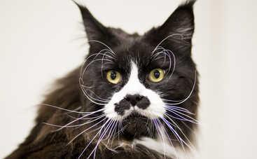 В Британии кот попался на краже нижнего белья