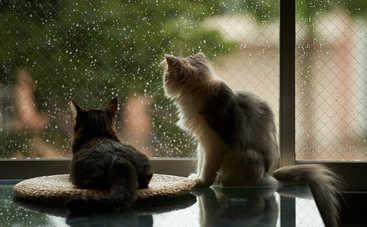Сегодня в Украине будет пасмурно и дождливо