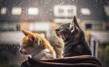 Сегодня украинцев ждет мокрая и морозная погода