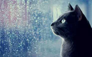 Во вторник украинцев ждет мокрая и ветреная погода