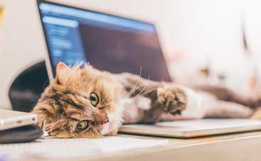 Создан сайт, который имитирует мурлыканье кота