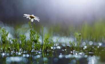 В воскресенье ожидается теплая погода, местами дожди