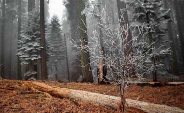 Сегодня в Украине будет прохладно, в Карпатах — мороз