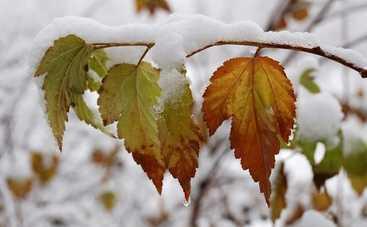 В первый день зимы в Украине будет плюсовая температура и дожди