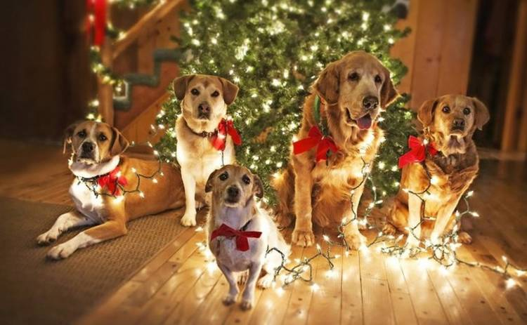 Новый год-2018: чем опасен год Желтой Земляной Собаки?