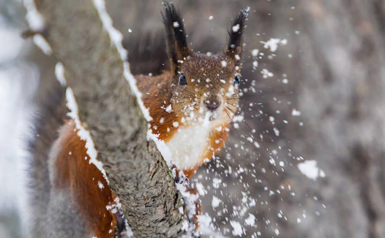 В четверг украинцев ждет небольшое потепление и мокрый снег