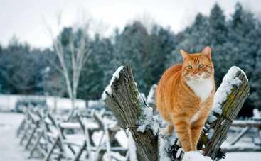 В понедельник Украину немного припорошит снегом