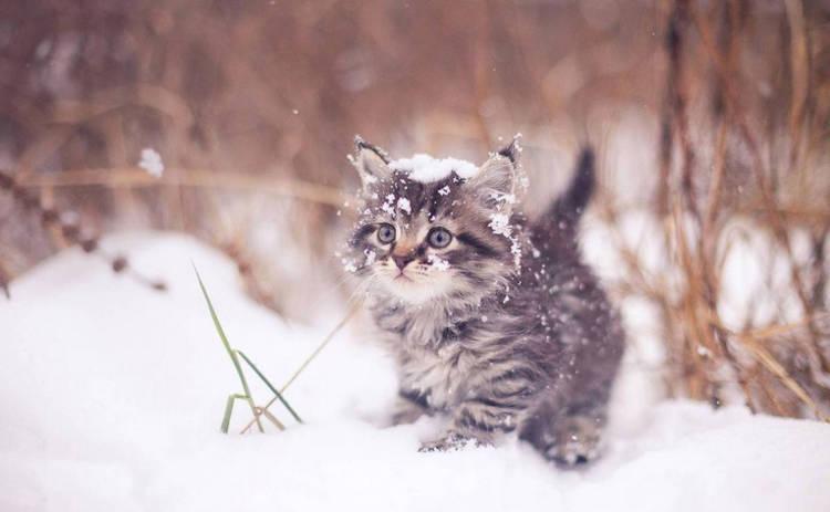 В Украину идет настоящая зима