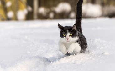 В Украину идет мощный холодный циклон