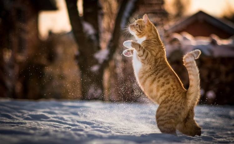 Сегодня в Украине будет снежно и скользко