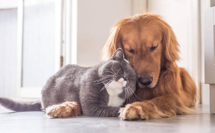 Как избавиться от вредных привычек домашних животных