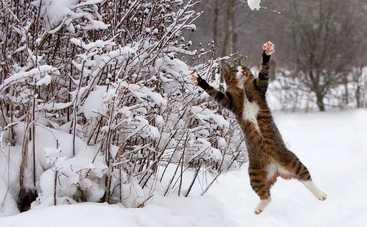 В первый день февраля в Украине будет солнечно и тепло