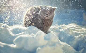 С понедельника в Украине резко похолодает