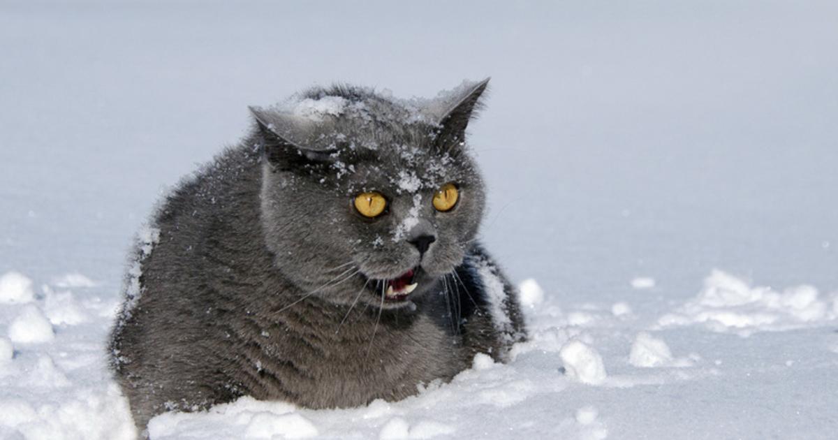Днем ситцевой, картинки с весенней снежной погодой смешные