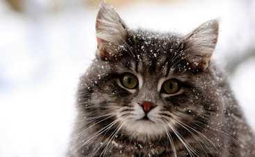 В среду в Украине будет морозно, местами придет тепло