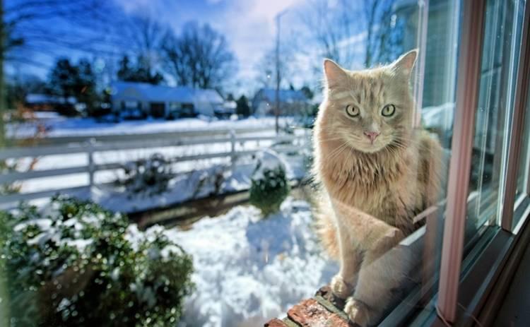 В субботу в Украине ожидается плюсовая температура и снег