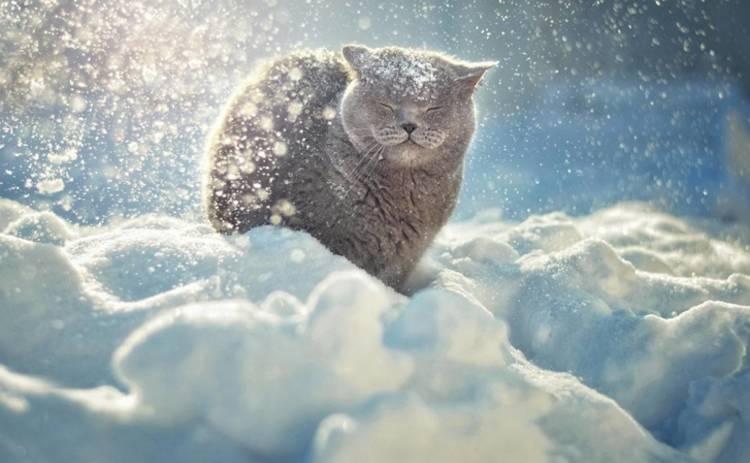 День святого Валентина в Украине будет морозным и пасмурным