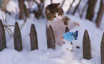 В субботу в Украину вернутся холода