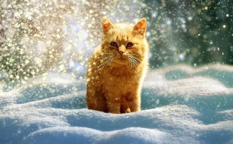 Последняя неделя зимы в Украине начнется с мороза